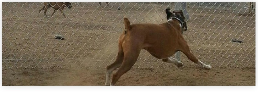 It's grand to see the dogs free to kick up their heels at Dog Gone Tired Sanctuary and Rescue.