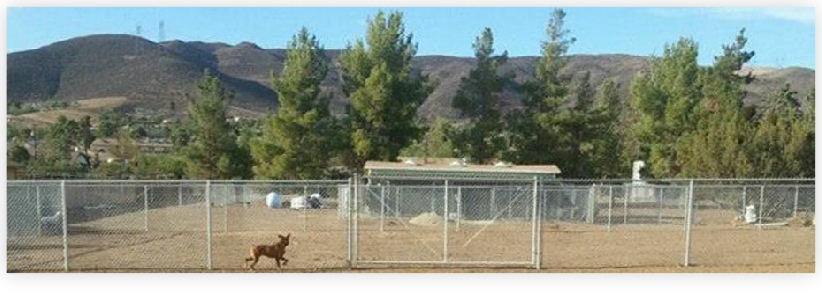 There's lots of room for the dogs to play, run and relax at Dog Gone Tired Sanctuary and Rescue.